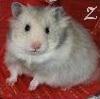Zigzy