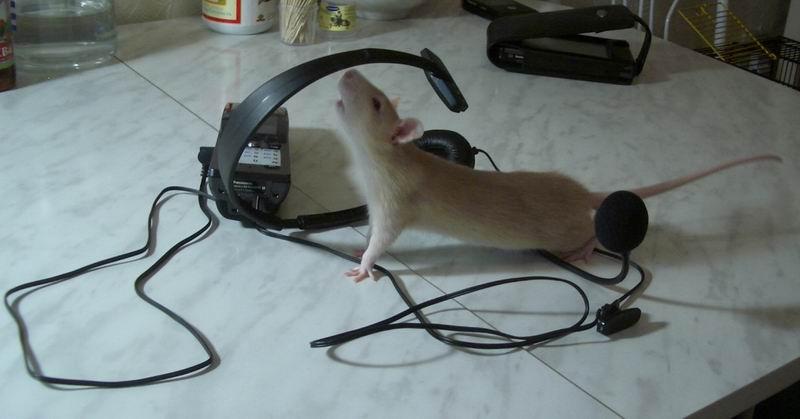 Крыся