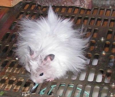 Фото: с сайта flickr.com.  Американские врачи пришли к выводу, что...