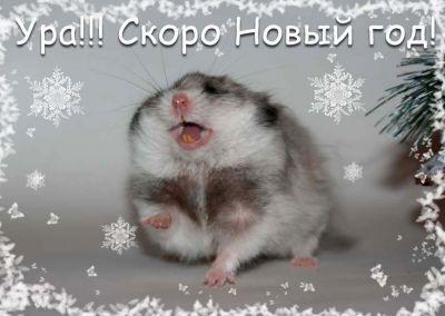 Ура!!! Скоро новый год!